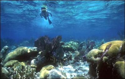 Top Spots To Snorkel In The Caribbean (Its Like Scuba, But For Wimps)