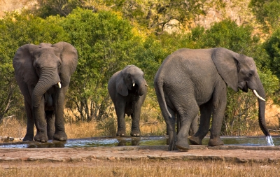 Kruger: The Worlds Best National Park?