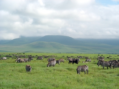 I Want To See 1.5 Million Wildebeest And Zebra This Summer, Where Should I Go?