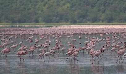 Kenyas Flamingo Park Recognized
