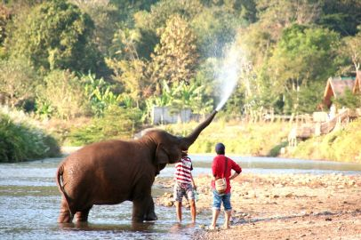 Changing The Course Of Tourism Starting With Elephants