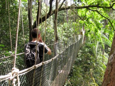 Forget Pandora: A Trek Into Earths Oldest Rainforest