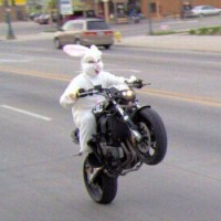 Bunny-Riding-Motorcycle3