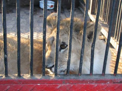 Lions, CouchSurfing And Murder: On The Perpetual Strangeness Of Existence