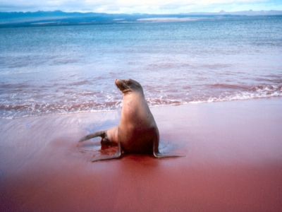 What To Expect In The Galapagos