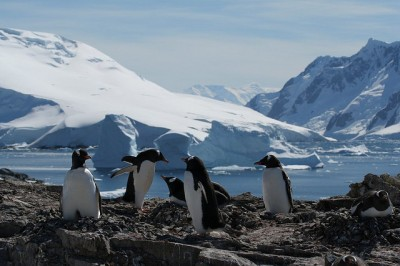 Antarctica Is Just A Flight Away, What Are You Waiting For?