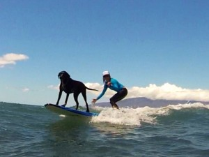 Surfing_Dog_Maui_Surfer_Girls1