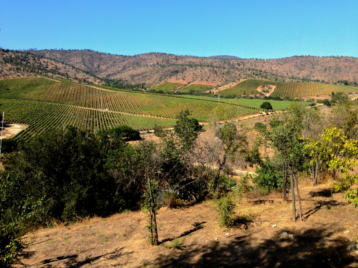 A Wine Lovers Guide To Casablanca Valley Chile3