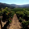 A Wine Lover's Guide To Casablanca Valley, Chile