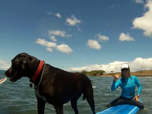 Luna_the_surfing_dog_maui_surfer_girls2