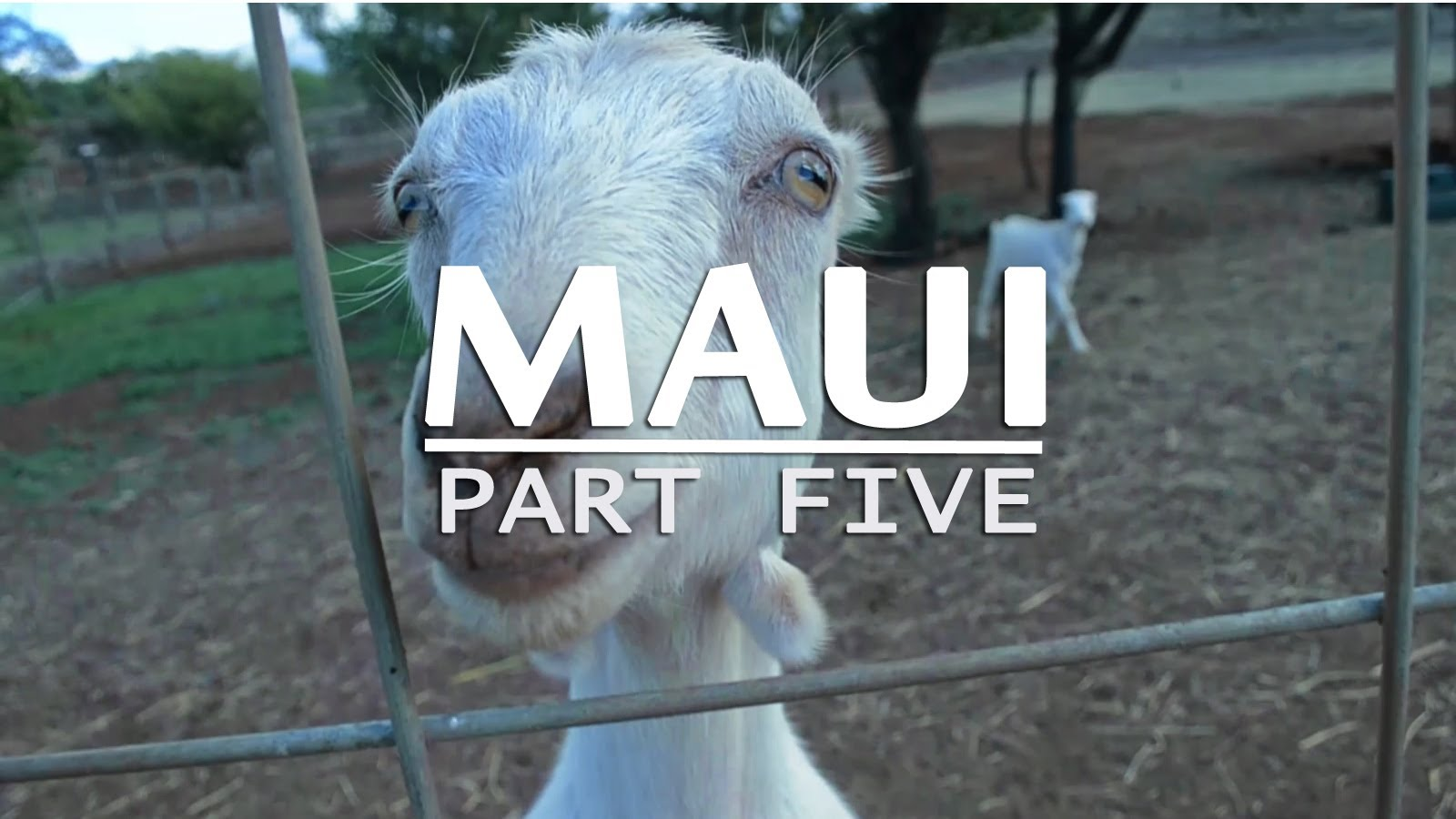 Travel Guide to Maui, Hawaii (Part 5)