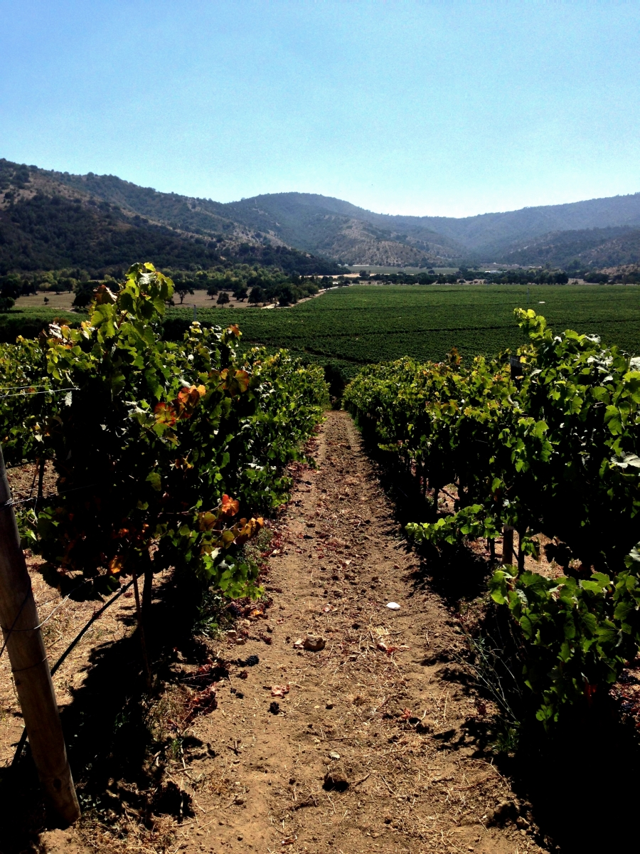 A Wine Lovers Guide To Casablanca Valley Chile1